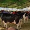 XXV Międzynarodowe Dni z Doradztwem Rolniczym